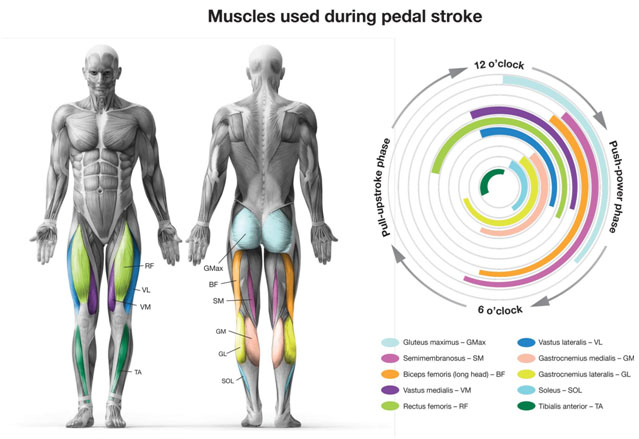 Pedal stroke